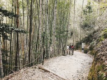 アスレチック竹林