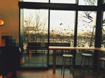 中川運河野鳥の大群